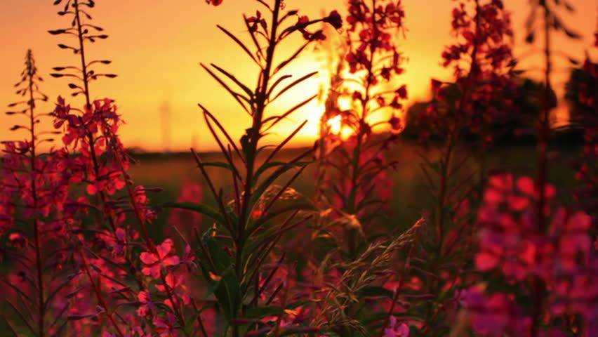 Shot of sunset through some flowers in Copenhagen, Denmark