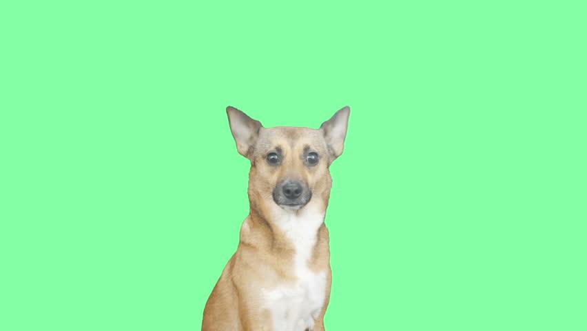 Header of Red Dog