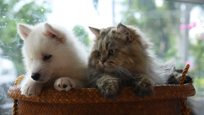 Close up of puppy and kitten look around on pet bed.