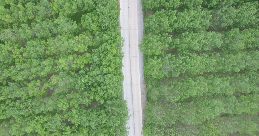 Aerial fly over of rubber plantation | Shutterstock HD Video #17302003