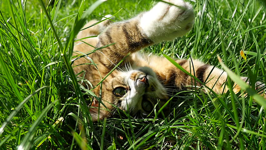 Lying on the grass relax playing cat