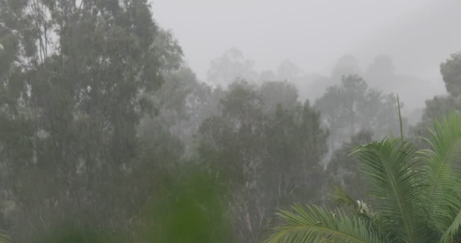 low pressure la nina rain on gum trees Australia