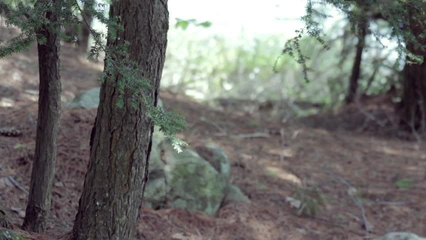 Northern forest landscape | Shutterstock HD Video #17544193