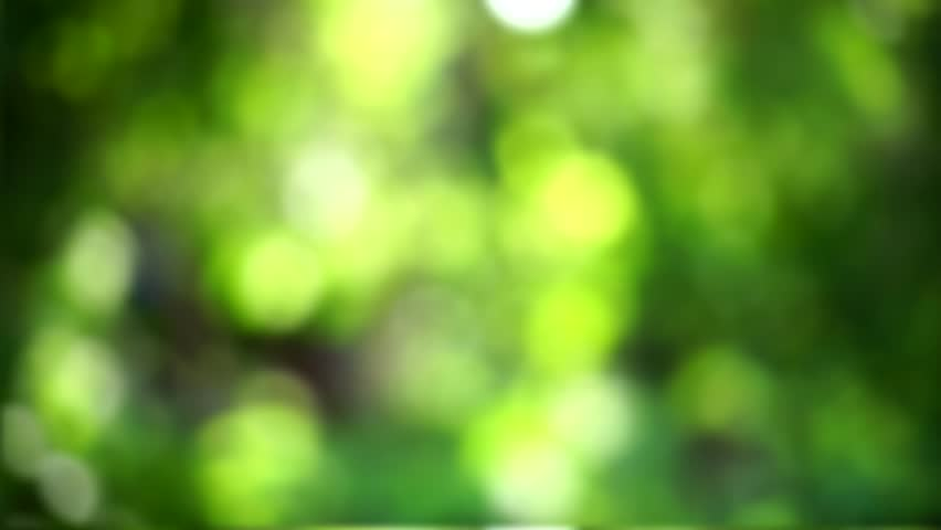 Blurred Nature Background Stock Footage Video 100 Royalty Free