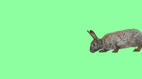 Funny gray hare on a green background