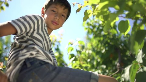 Young boy climbing up a tree and smiling.