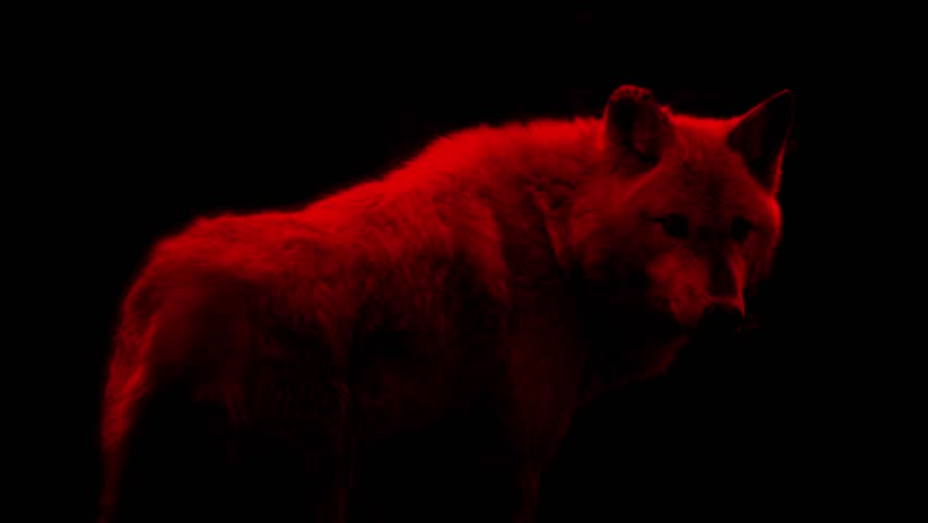 Blood Red Wolf Abstract