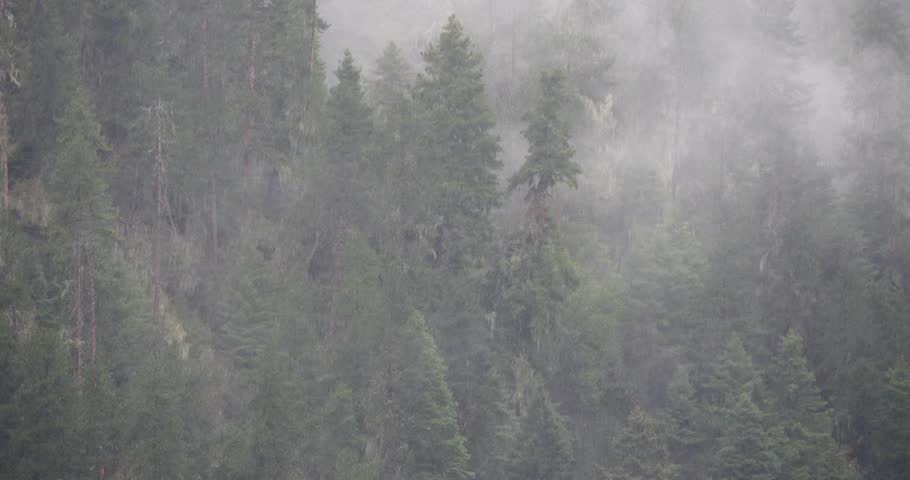 4k mountain mist rising in the morning,fog pine trees,such as wonderland.Bomi County in tibet,the largest precipitation area in China.