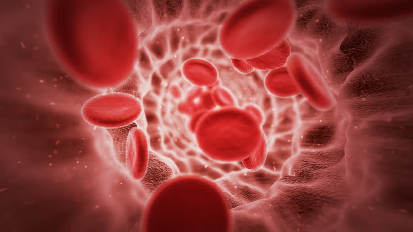 Red blood cells in artery. Loopable CG animation.