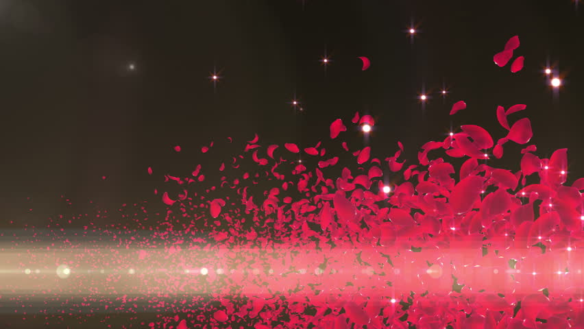 Rose Flower Petals and Lens Flares. 30 seconds.