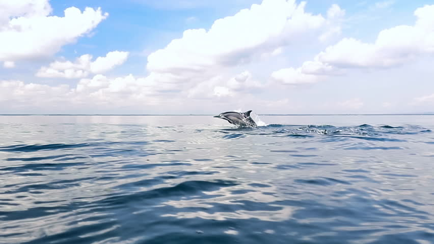 Tranquil and serene slow motion video of wild dolphins jump from water in sea #18070063
