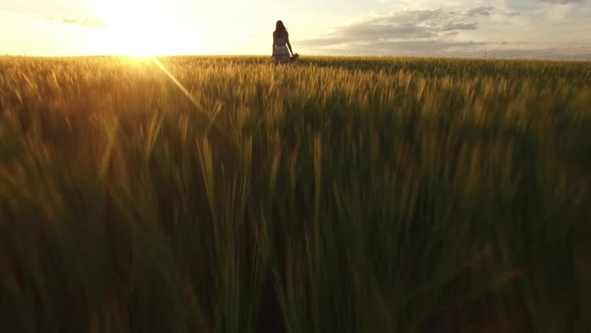 HD 4K Young woman walks in wheat field sunset harvest summer slow motion. Attractive girl farmers daughter touches spikes flower bouquet in hand steps in idyllic landscape golden bright sun evening | Shutterstock HD Video #18077773