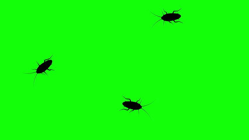 Three cockroach on green screen, CG animated silhouettes, seamless loop