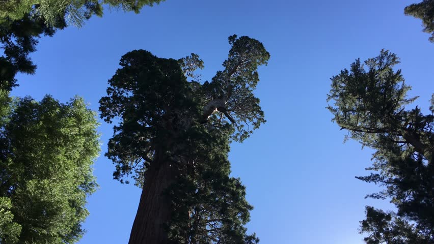 kings canyon sequoia national park, usa