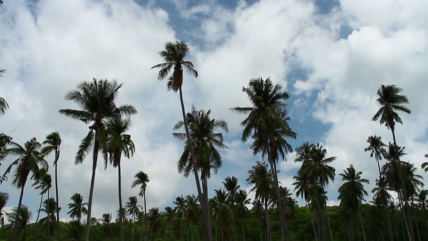 Coconut tree, cloud, sky | Shutterstock HD Video #18186223