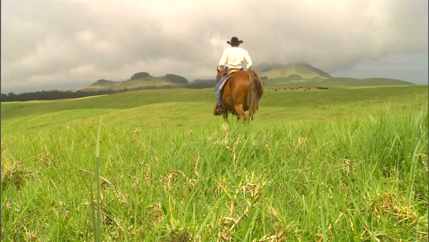 A Hawaiian cowboy, paniolo, riding horseback on the Big Island of Hawaii