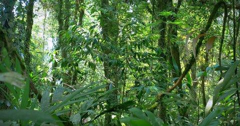 Tropical plants vegetation background in dense jungle rain forest