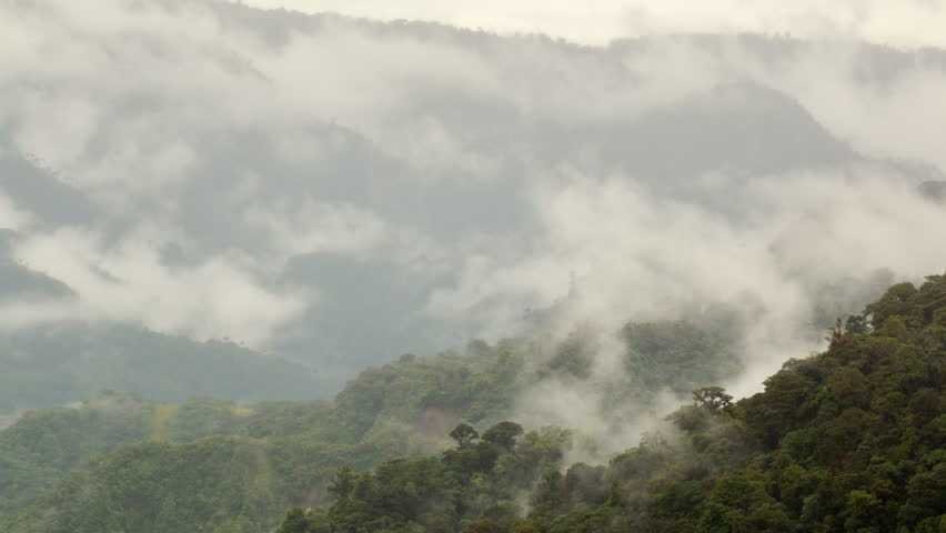 Time-lapse of mist rising from primary montane rainforest in the Rio Quijos Valley, Ecuador. Rainfall in the Amazon basin is recycled into the atmosphere by transpiration from the trees.