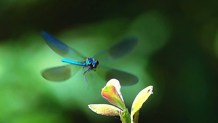 Beautiful dragonfly