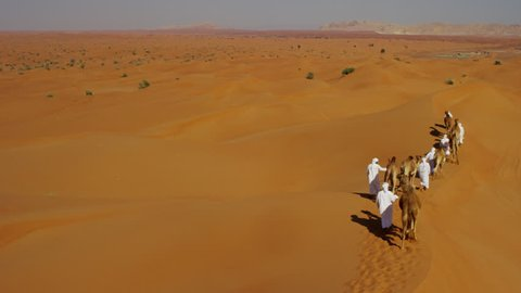 Aerial drone of camels being led by handlers across desert sand dunes