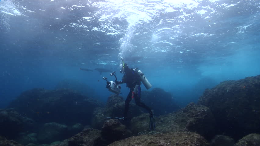 Videographer swimming on rocky reef with Galapagos fur seal in Galapagos Islands (Ecuador), HD, UP21528   Shutterstock HD Video #18649745