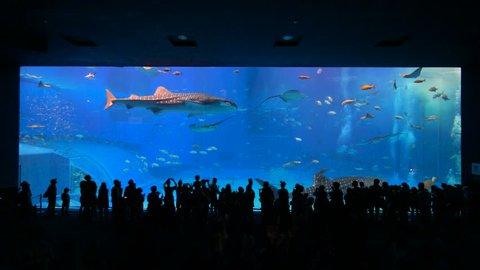 Okinawa Aquarium 4k With Beautiful Stock Footage Video 100 Royalty
