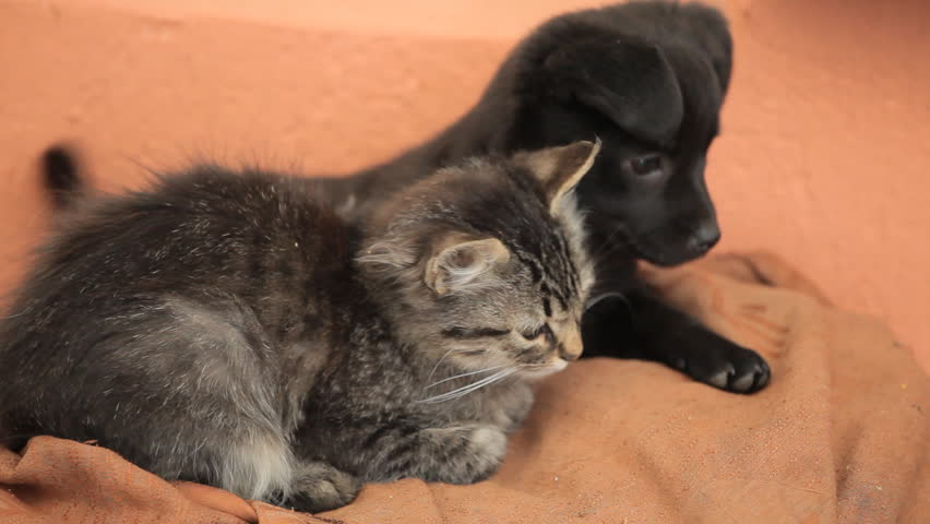 Friendly puppy dog and kitty cat in love