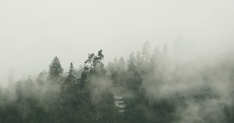 4k time lapse of mountain mist rising in the morning,fog pine trees,such as wonderland.Bomi County in tibet,the largest precipitation area in China. 4k