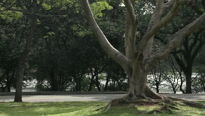 Ibirapuera Park - Brazil