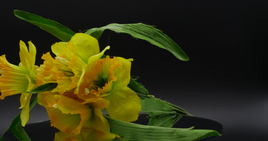 Stock video of timelapse of a lily blooming 1287331 shutterstock fake yellow flowers rotating on mirror isolated on black 4k 4k stock footage clip mightylinksfo Images