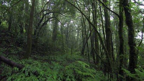 Dolly Shot rainforest in doi inthanon national park, Thailand.