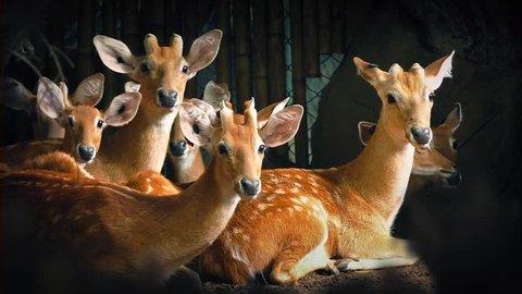 Group Of Deer Look Up