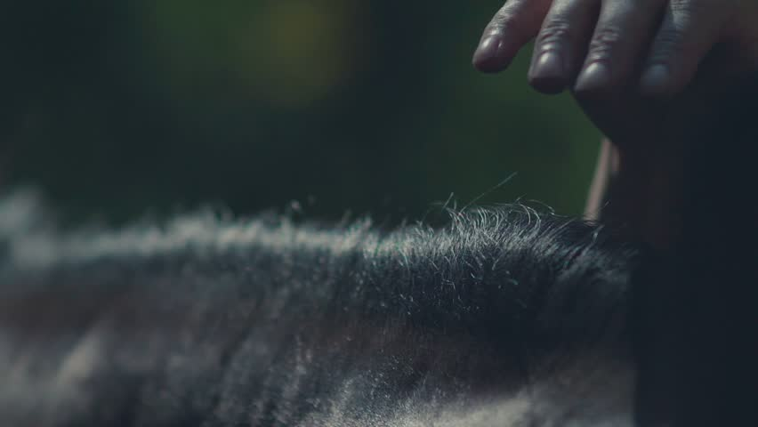 Horse mane. Woman's hand stroking the horse. Muzzle of a horse. Harness for horses made of leather. Brown horse. Horse silhouette. Graceful horse. Horse riding in the summer forest. Caring for the | Shutterstock HD Video #19393642