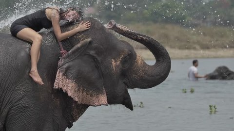 Girl have a shower on the elephant