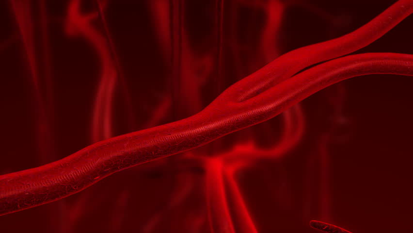 Human blood arteries and veins. Zoom in motion.