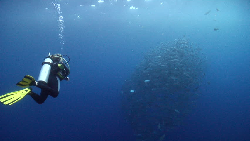 Expert scuba diver with perfect buoyancy swimming in bluewater with Bigeye trevally in Solomon Islands, HD, UP18452