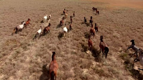 Aerial movie with herd of thoroughbred horses moving fast on the desert. Herd of wild mustangs running gallop on the scorched earth of Texas. The concept of freedom, strength, independence and speed