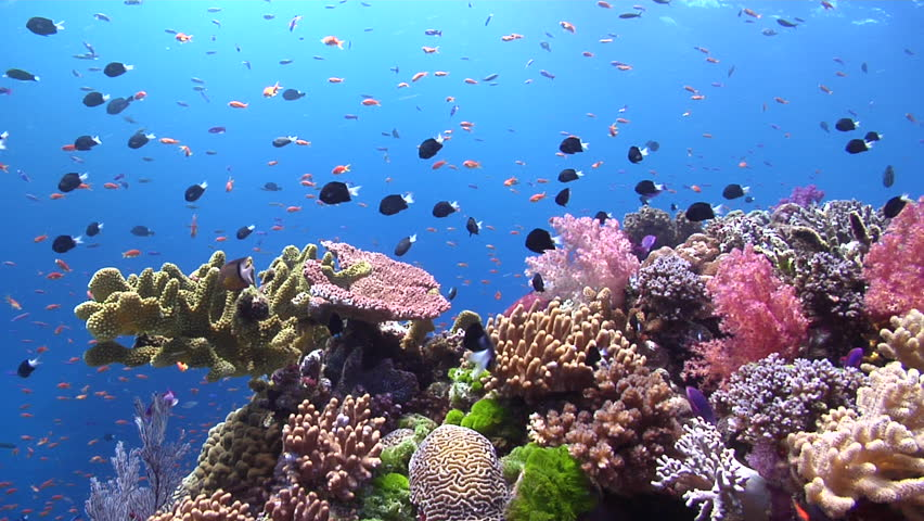 Stock Video Clip of Beautiful underwater scenery current ...