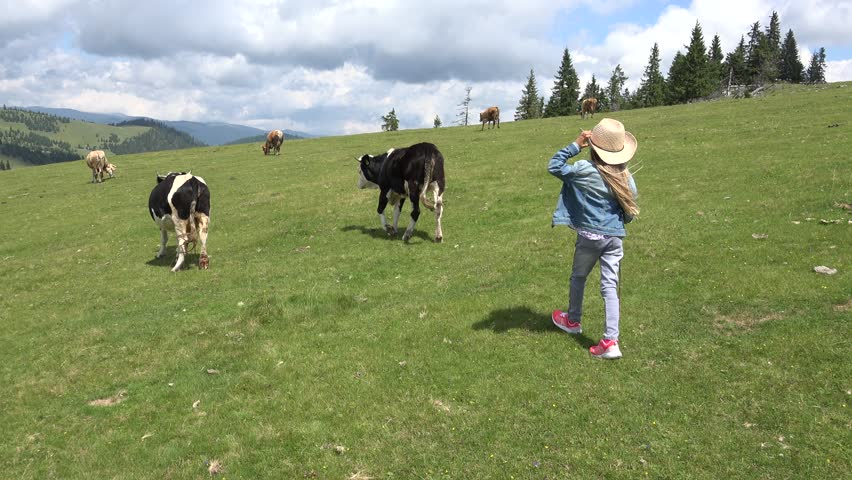 4K Farmer Child Pasturing Cows, Cowherd Girl Walking Cattle in Mountains