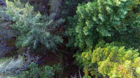 Aerial drone shots of the beautiful forest in Canada