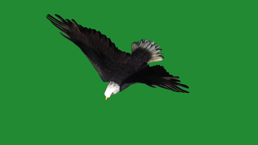 Eagle Fly Landing 1 Stock Footage Video 100 Royalty Free