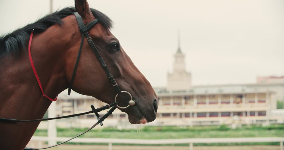 thoroughbred race horse brown close-up face in the background of a running track, slow motion