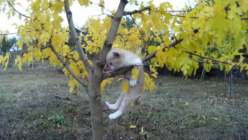 Little kitten falls from tree on meadow in nature.