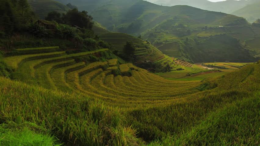 Rice fields on terraced of Mu Cang Chai, YenBai, Vietnam. Rice fields prepare the harvest at Northwest Vietnam.Vietnam landscapes.   Shutterstock HD Video #20298469