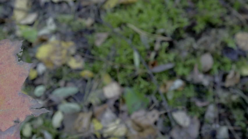 Dolly, slow motion, wind moving colored leaves - Autumn | Shutterstock HD Video #20317033