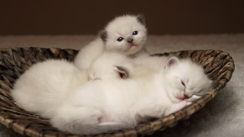4k footage three baby cats sleeping one kitty looking curious