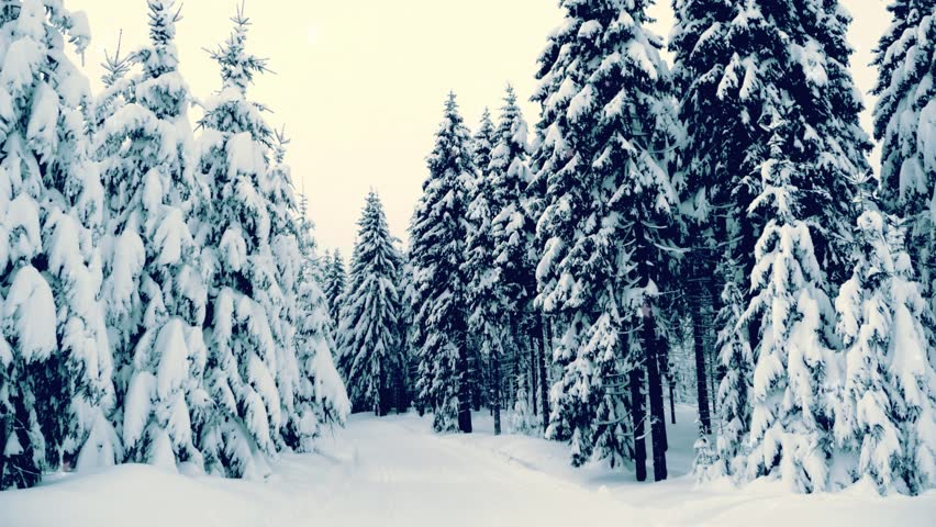 Winter snowy forest with snow covered trees, falling snow and stars. Vintage Christmas, new year slow motion animation. HD 1080.