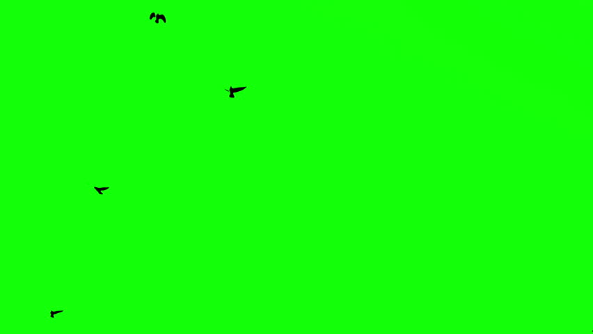 birds on the green screen #20422693