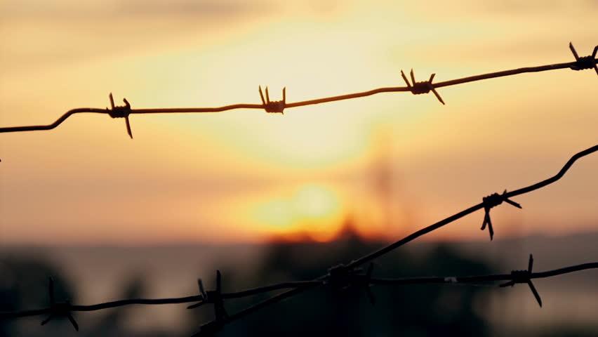 barbed wire prison sunset orange background #20554516