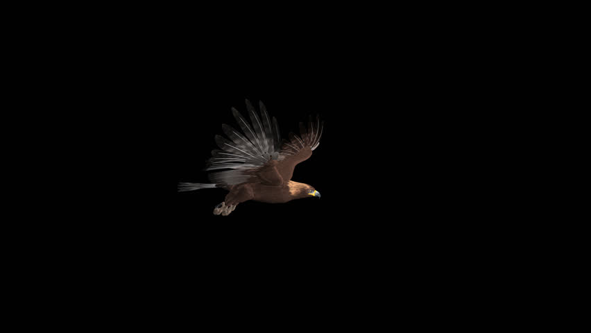 Golden Eagle - Flying Loop - Right Side View - Alpha Channel - 4K - 3D animation of prey bird isolated on transparent background for your nature, travel and fantasy projects.